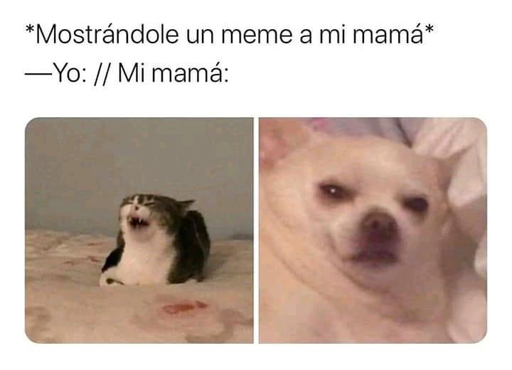 *Mostrándole un meme a mi mamá*  Yo: // Mi mamá: