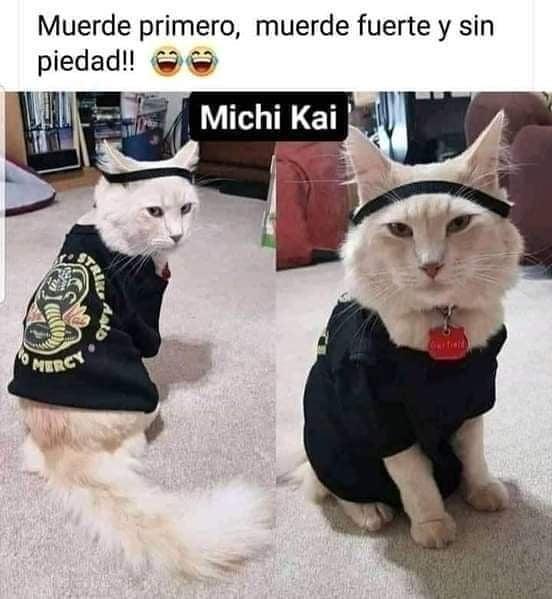 Muerde primero, muerde fuerte y sin piedad!!  Michi Kai