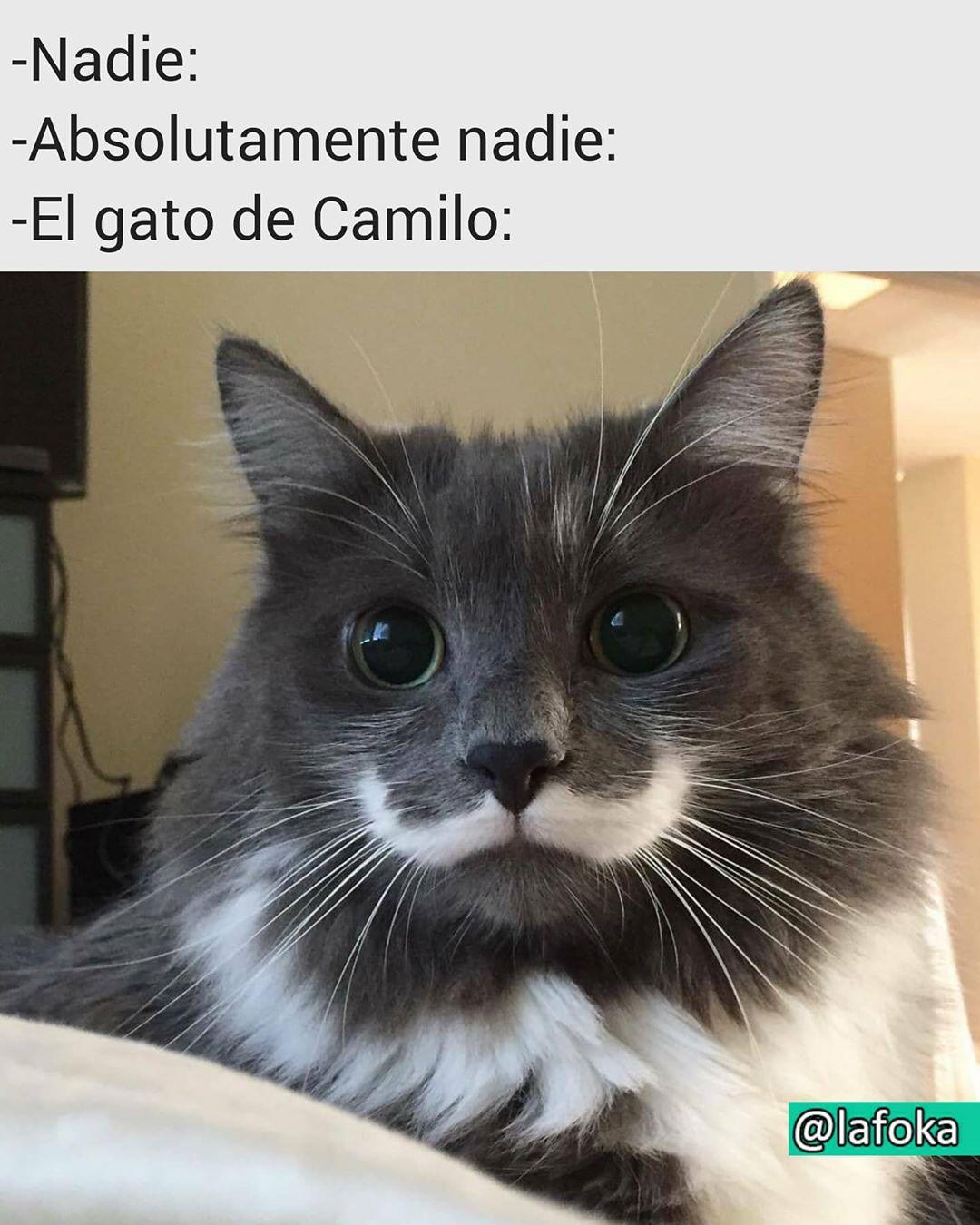 Nadie:  Absolutamente nadie:  El gato de Camilo: