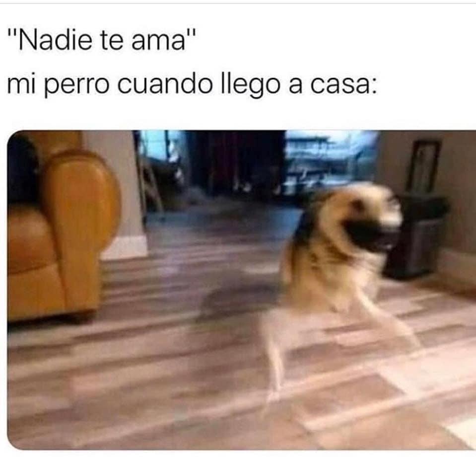 """""""Nadie te ama"""".  Mi perro cuando me ve:"""