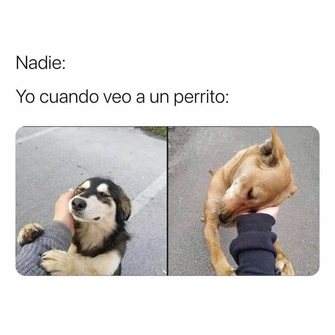 Nadie: Yo cuando veo a un perrito: