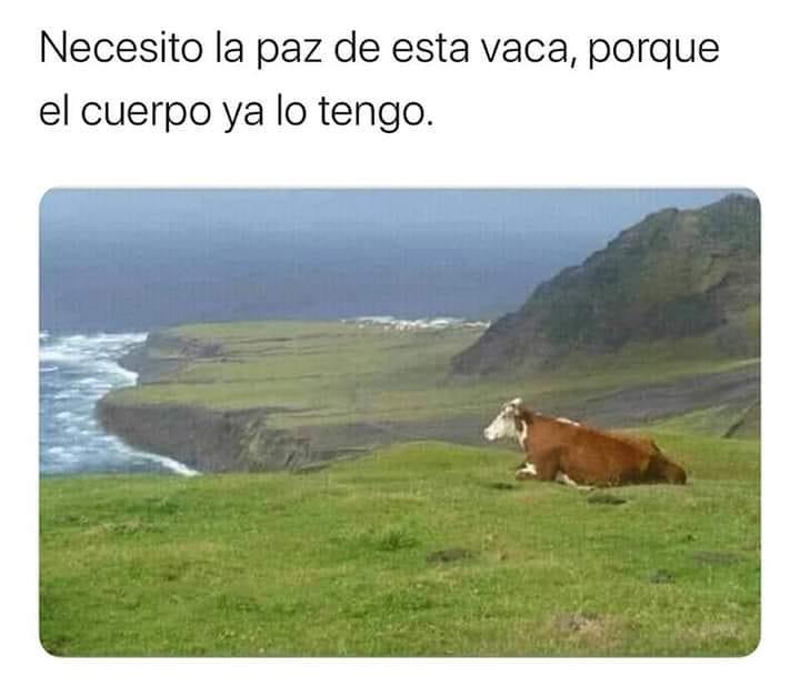 Necesito la paz de esta vaca porque el cuerpo ya lo tengo.