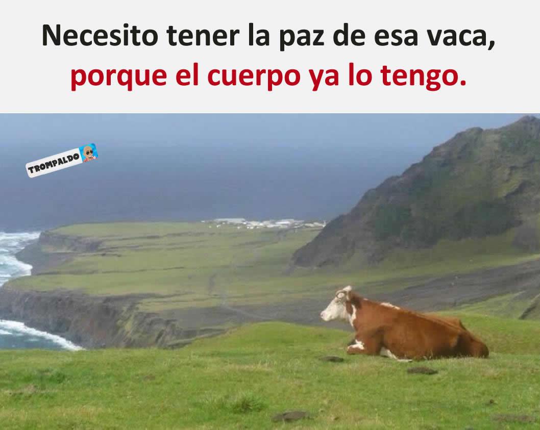 Necesito tener la paz de esa vaca, porque el cuerpo ya lo tengo.
