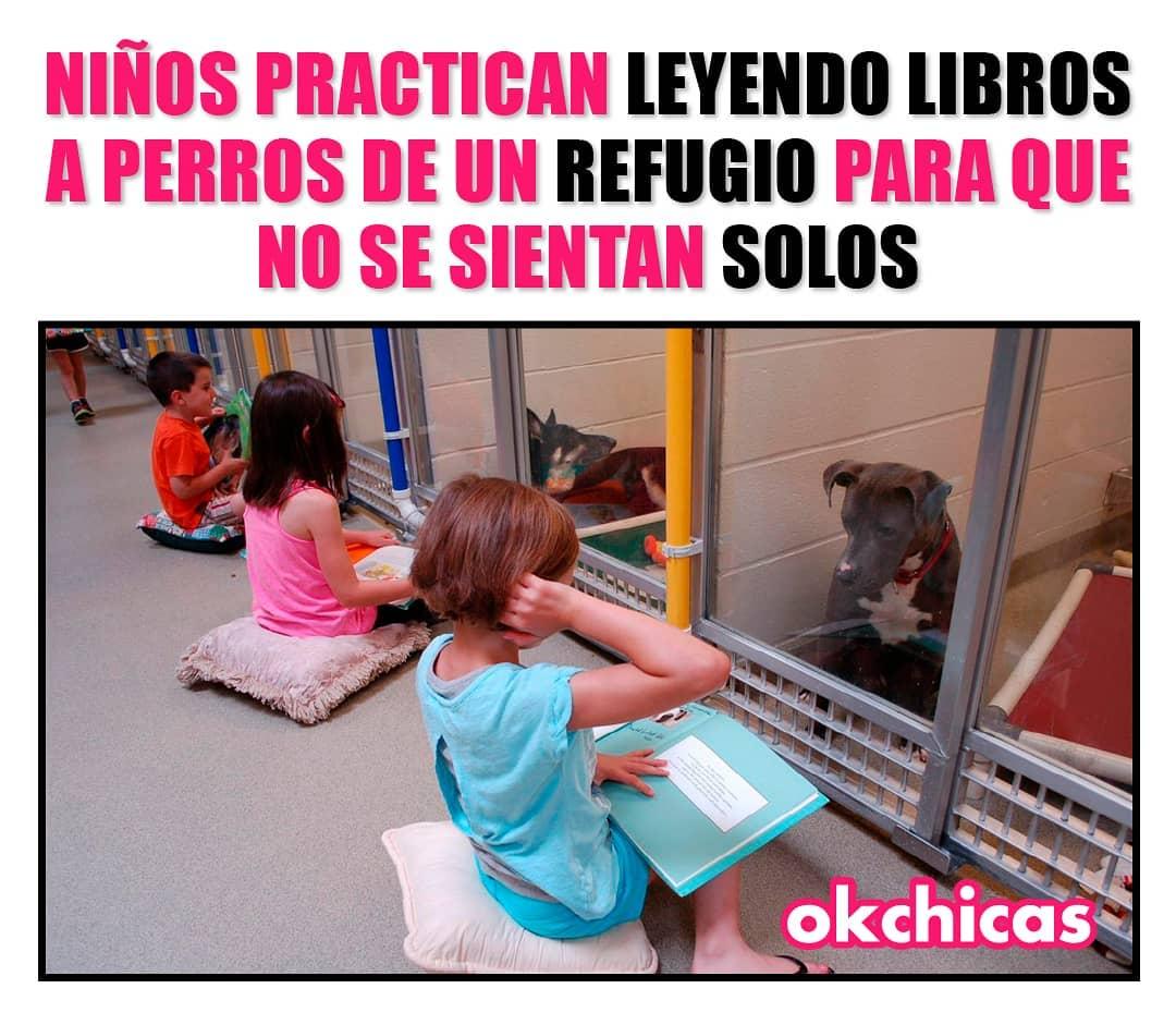 Niños practican leyendo libros a perros de un refugio para que no se sientan solos.