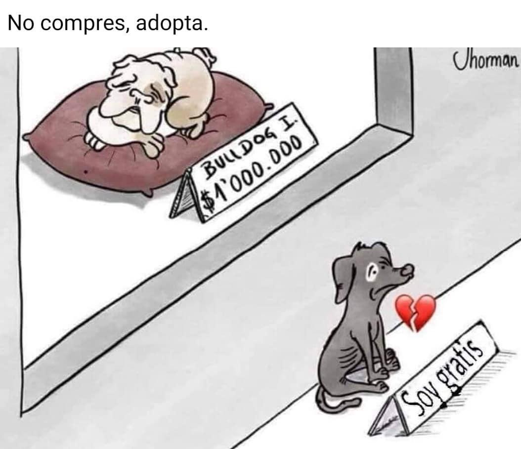 No compres, adopta.  Bulldog I $1000.000. Soy gratis.