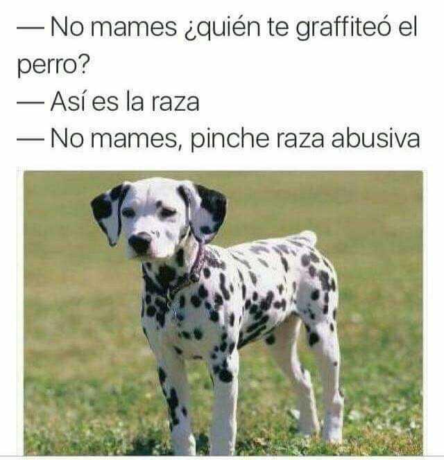 No mames ¿quién te graffiteó el perro?  Así es la raza.  No mames, pinche raza abusiva.