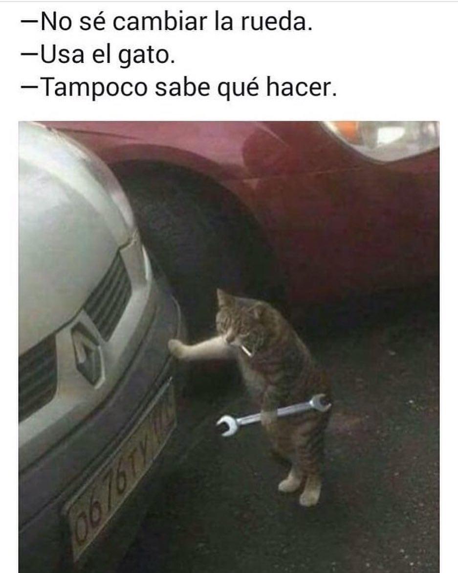 No sé cambiar la rueda.  Usa el gato.  Tampoco sabe qué hacer.