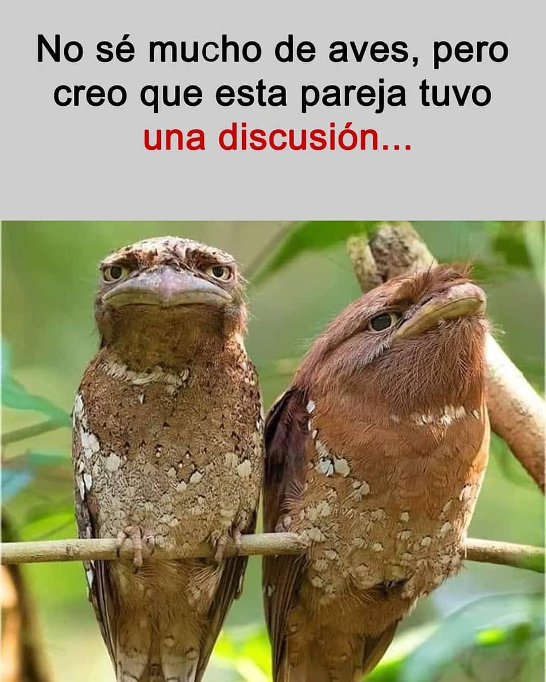 No sé mucho de aves, pero creo que esta pareja tuvo una discusión...