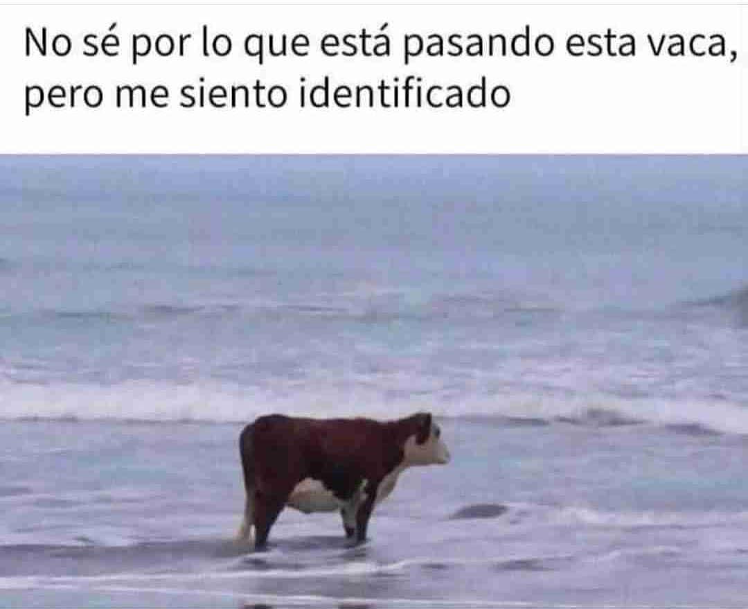 No sé por lo que está pasando esta vaca, pero me siento identificado.