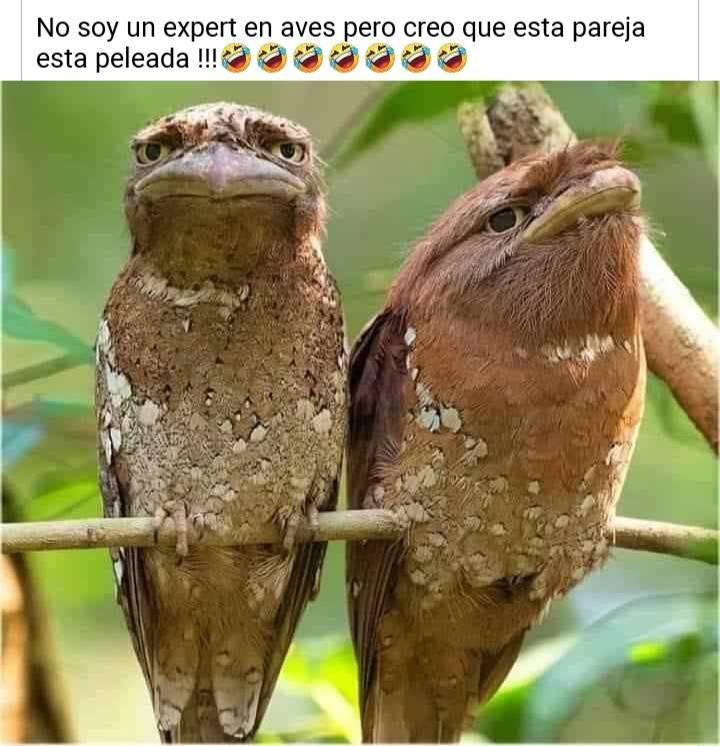 No soy un expert en aves, pero creo que esta pareja está peleada!!!