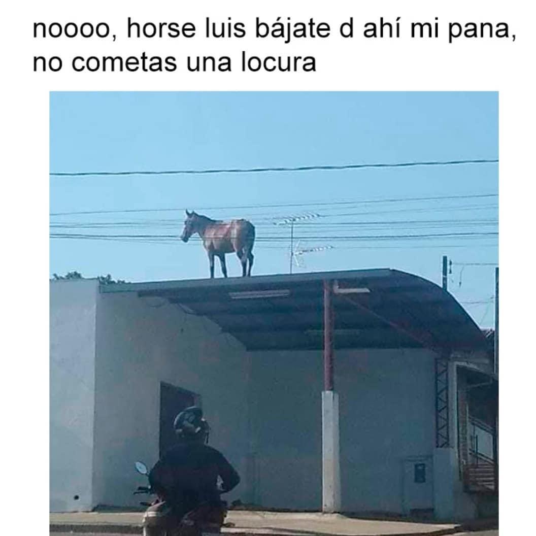 Noooo, horse luis bájate d ahí mi pana, no cometas una locura.