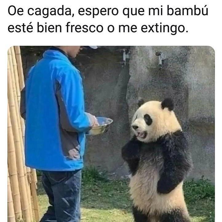 Oe cagada, espero que mi bambú esté bien fresco o me extingo.