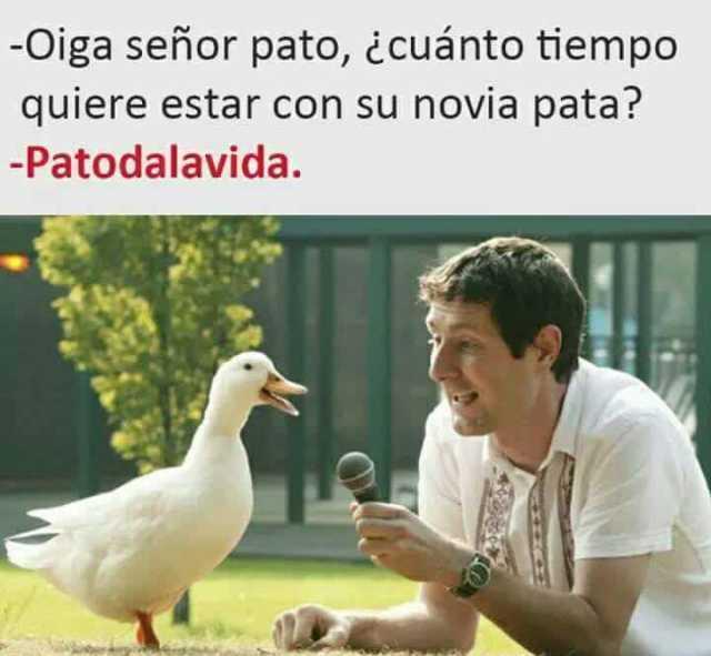 Oiga señor pato, ¿cuánto tiempo quiere estar con su novia pata?  Patodalavida.