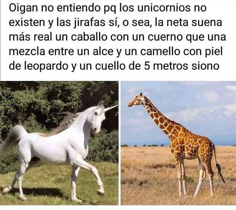 Oigan no entiendo pq los unicornios no existen y las jirafas sí, o sea, la neta suena más real un caballo con un cuerno que una mezcla entre un alce y un camello con piel de leopardo y un cuello de 5 metros siono.
