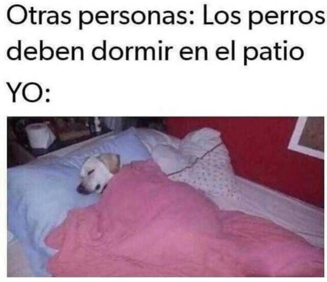 Otras personas: Los perros deben dormir en el patio.  Yo: