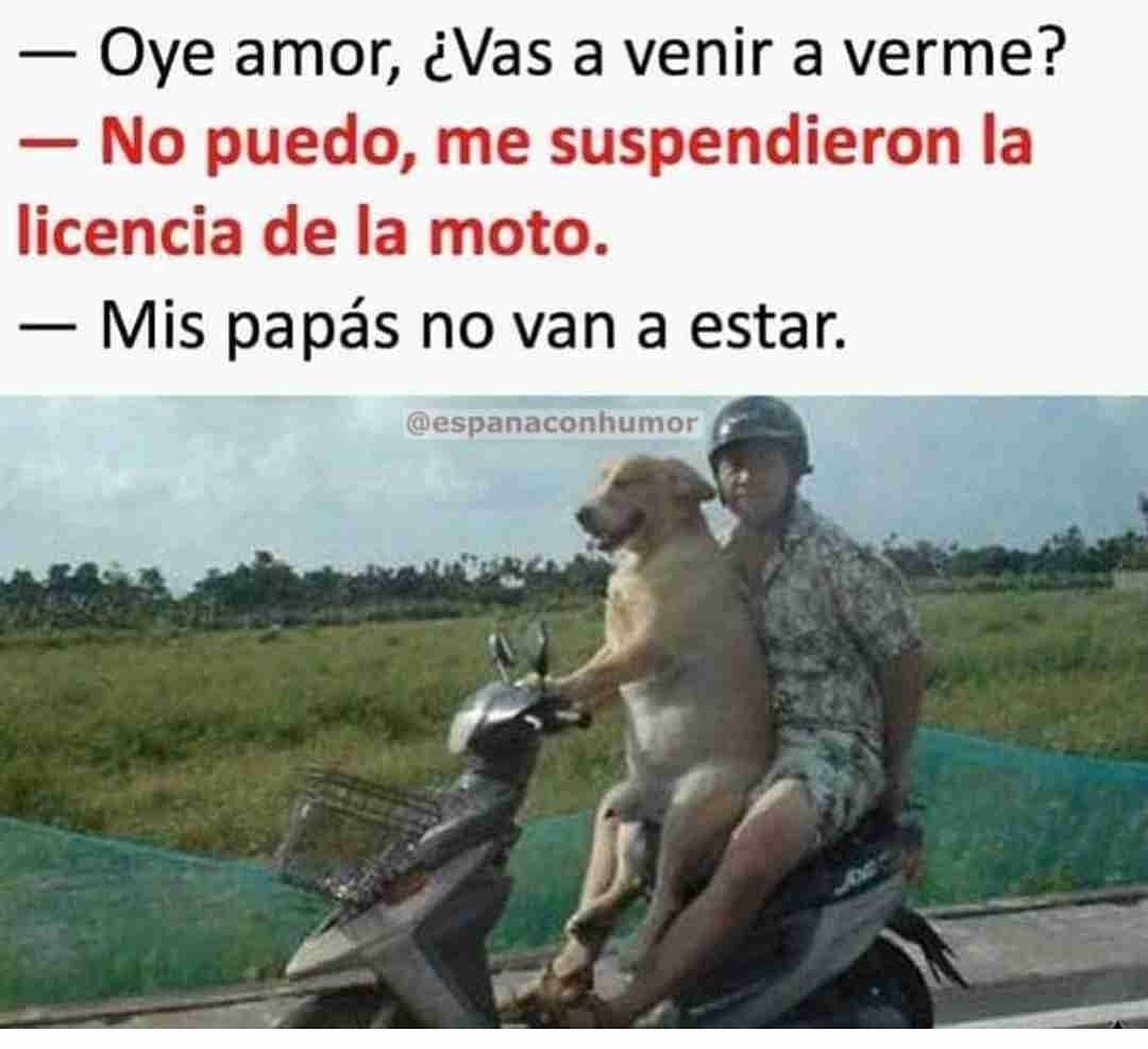 Oye amor, ¿Vas a venir a verme?  No puedo, me suspendieron la licencia de la moto.  Mis papás no van a estar.