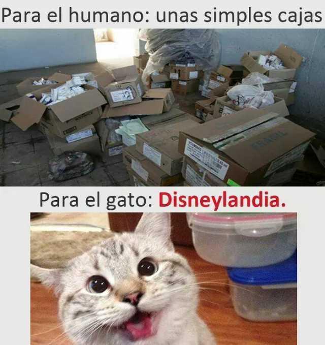 Para el humano: unas simples cajas.  Para el gato: Disneylandia.