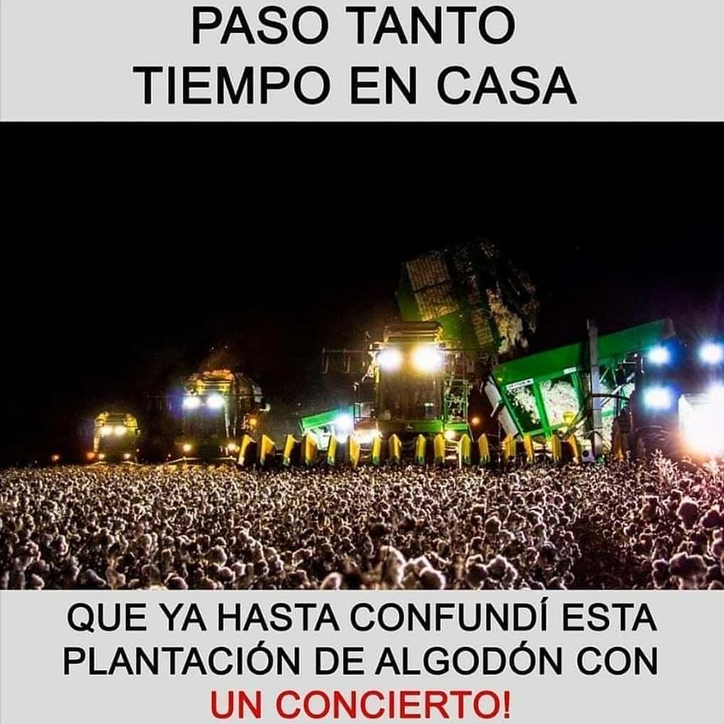 Paso tanto tiempo en casa que ya hasta confundí esta plantación de algodón con un concierto!