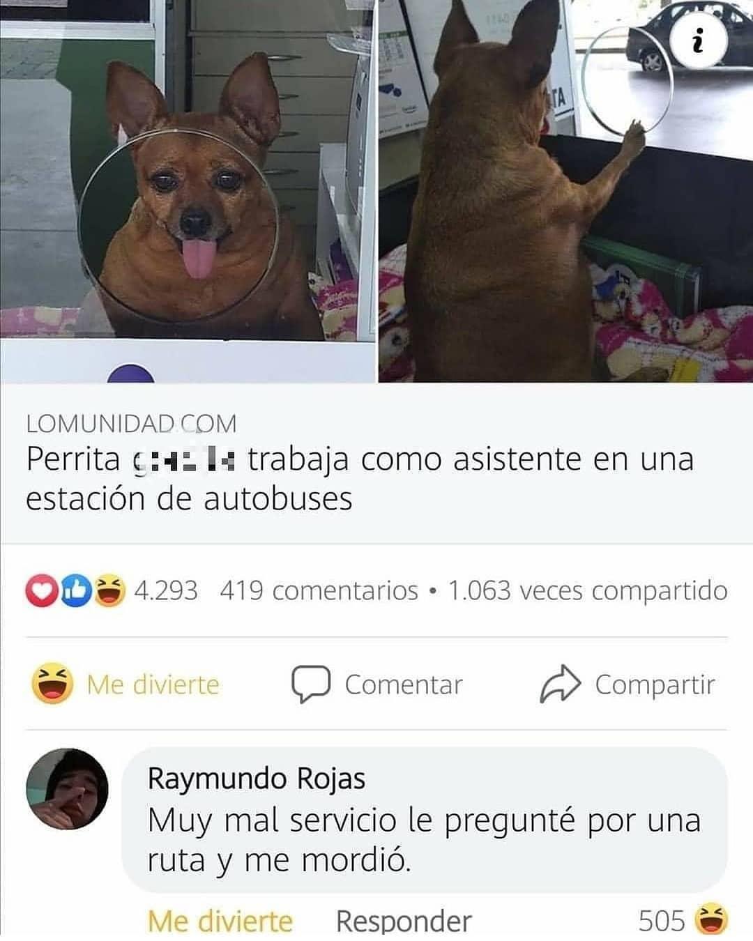 Perrita trabaja como asistente en una estación de autobuses.  Raymundo Rojas: Muy mal servicio le pregunté por una ruta y me mordió.