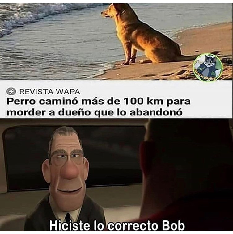 Perro caminó más de 100 km para morder a dueño que lo abandonó.  Hiciste lo correcto Bob.