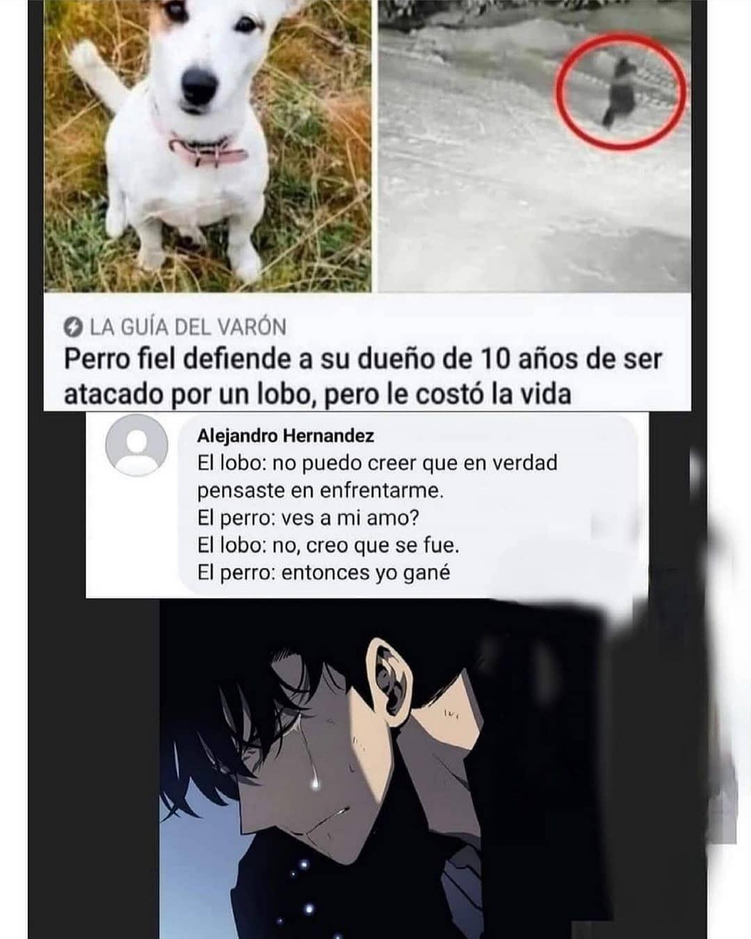 Perro fiel defiende a su dueño de 10 años de ser atacado por un lobo, pero le costó la vida.  El lobo: no puedo creer que en verdad pensaste en enfrentarme.  El perro: ves a mi amo?  El lobo: no, creo que se fue.  El perro: entonces yo gané.