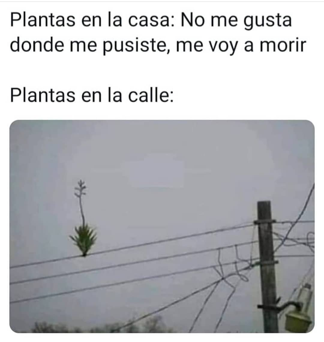 Plantas en la casa: No me gusta donde me pusiste, me voy a morir. Plantas en la calle: