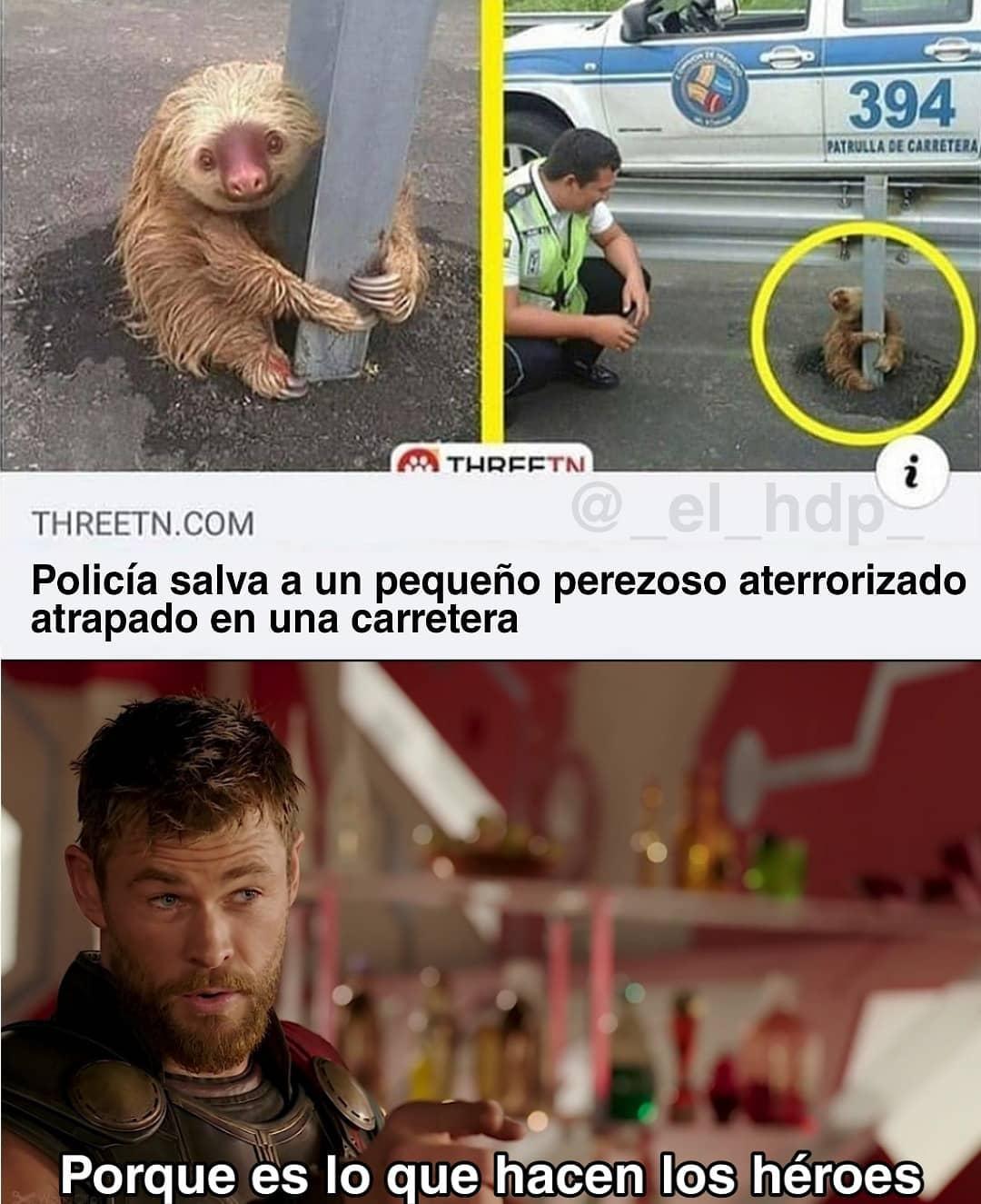 Policía salva a un pequeño perezoso aterrorizado atrapado en una carretera.  Porque es lo que hacen los héroes.