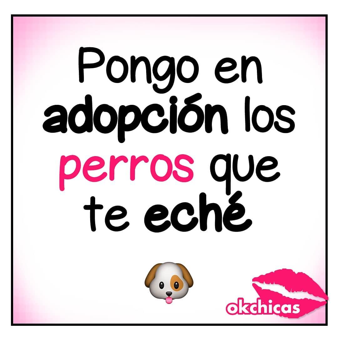 Pongo en adopción los perros que te eché.