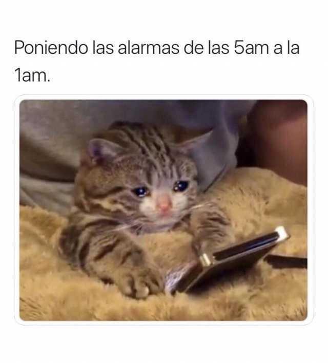 Poniendo las alarmas de las 5am a la 1am.