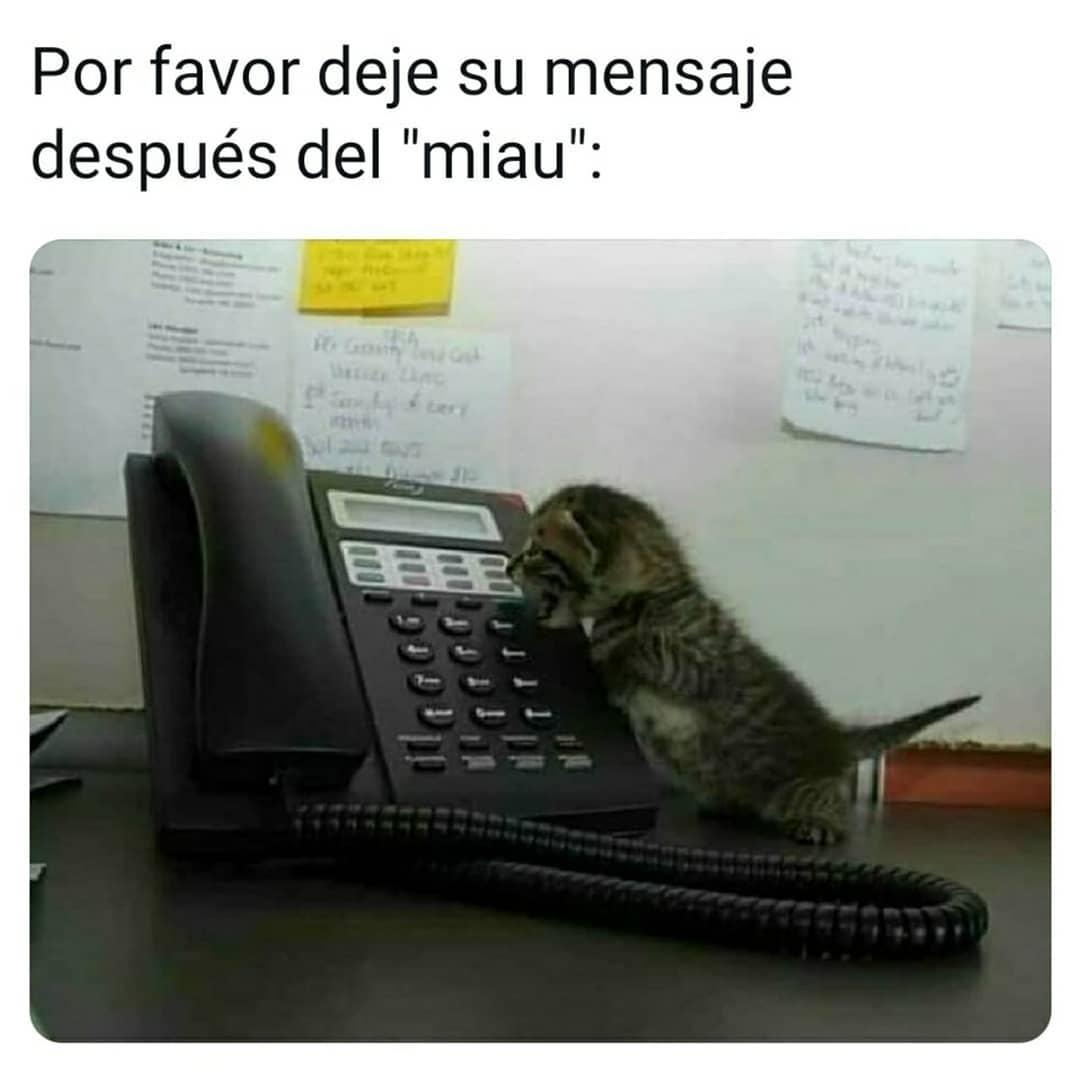"""Por favor deje su mensaje después del """"miau""""."""
