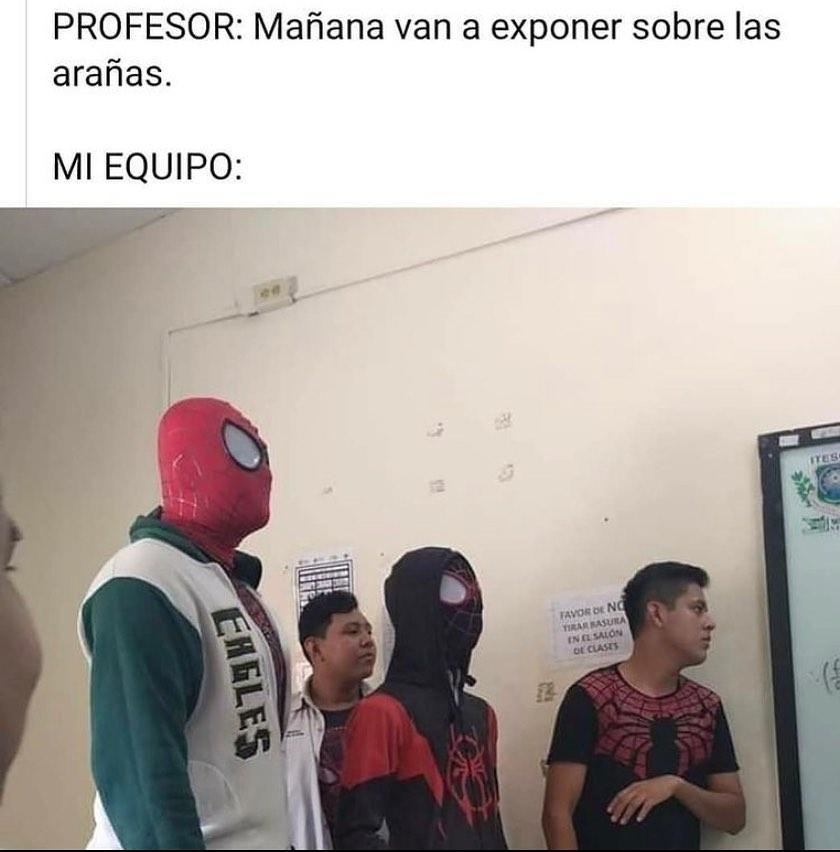 Profesor: Mañana van a exponer sobre las arañas.  Mi equipo: