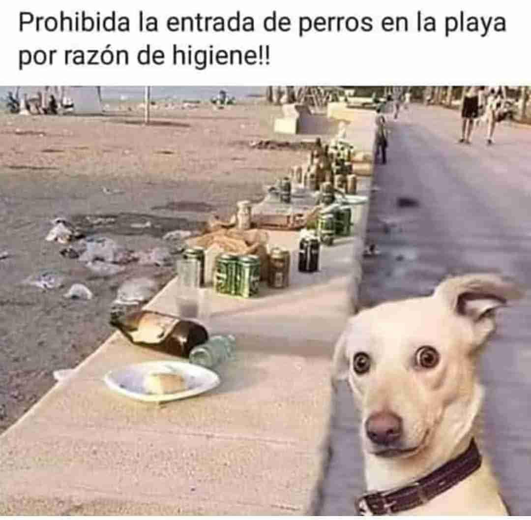 Prohibida la entrada de perros en la playa por razón de higiene!!