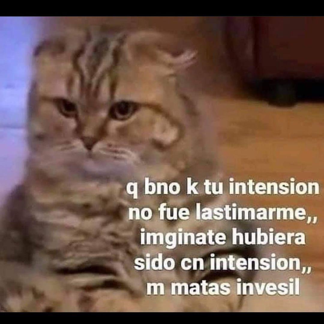 "Q bno k tu intension no fue lastimarme imginate hubiera sido cn intension"" m matas invesil."