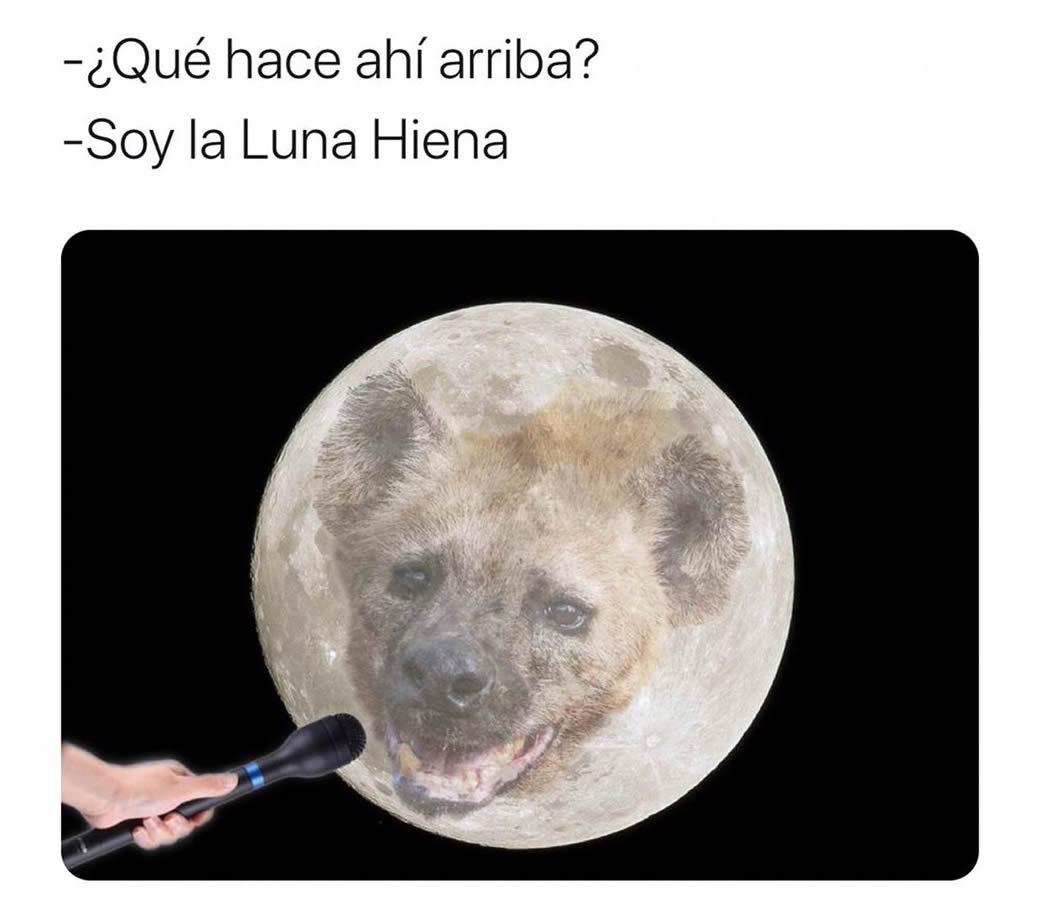 ¿Qué hace ahí arriba?  Soy la Luna Hiena.