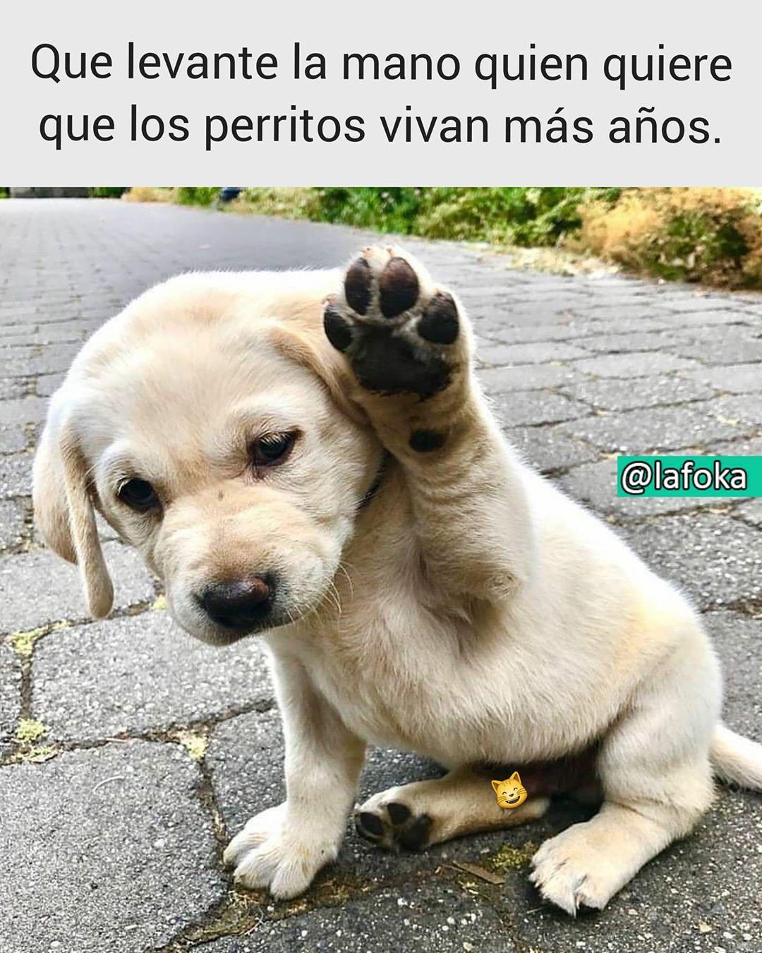 Que levante la mano quien quiere que los perritos vivan más años.