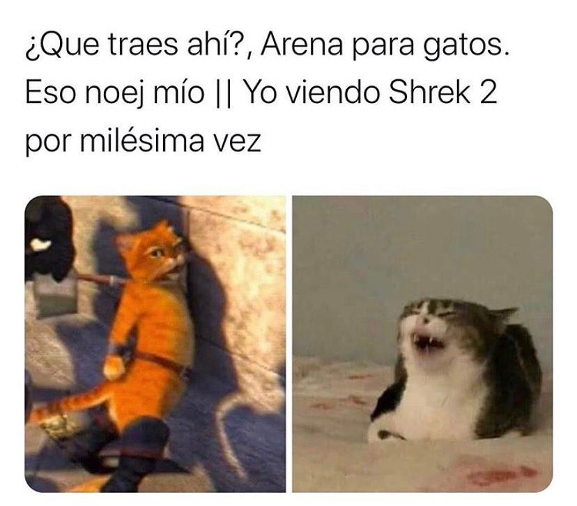 ¿Que traes ahí?, Arena para gatos. Eso noej mío. // Yo viendo Shrek 2 por milésima vez.