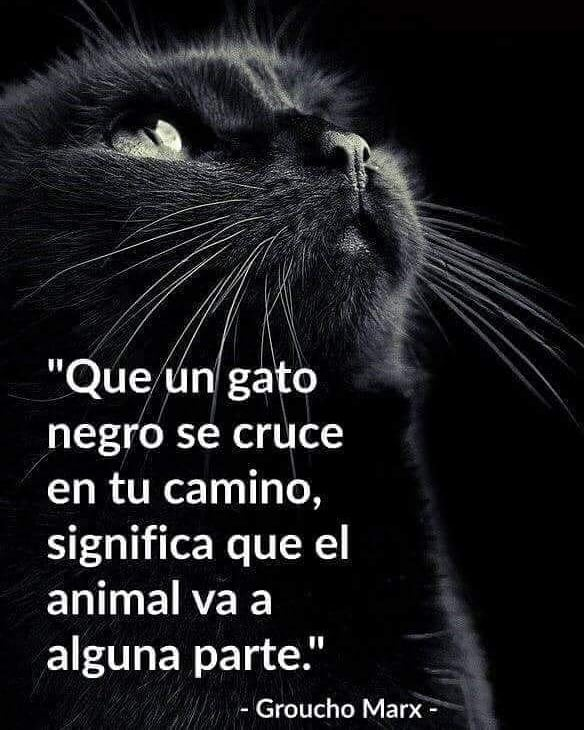 """""""Que un gato negro se cruce en tu camino, significa que el animal va a alguna parte.""""  - Groucho Marx -"""
