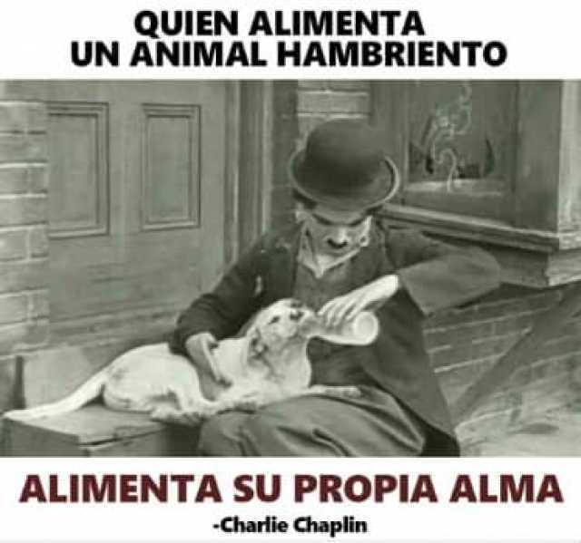 Quien alimenta un animal hambriento alimenta su propia alma.  Chalie Chaplin.