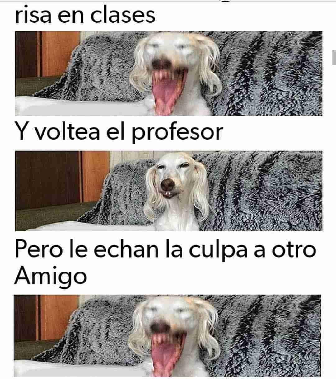 Risa en clases y voltea el profesor pero le echan la culpa a otro amigo.