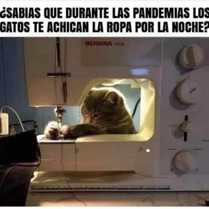 ¿Sabias que durante las pandemias los gatos te achican la ropa por la noche?