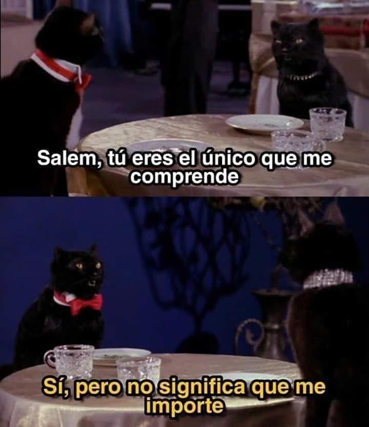 Salem, tú eres el único que me comprende.  Sí, pero no significa que me importe.
