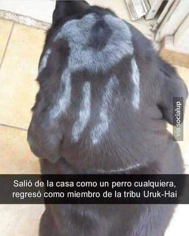 Salió de la casa como un perro cualquiera, regresó como miembro de la tribu Uruk-Hai.