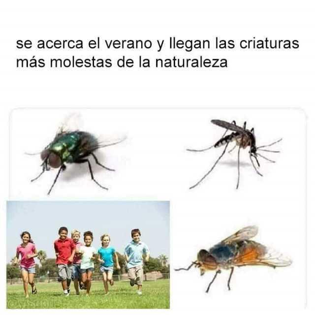 Se acerca el verano y llegan las criaturas más molestas de la naturaleza.