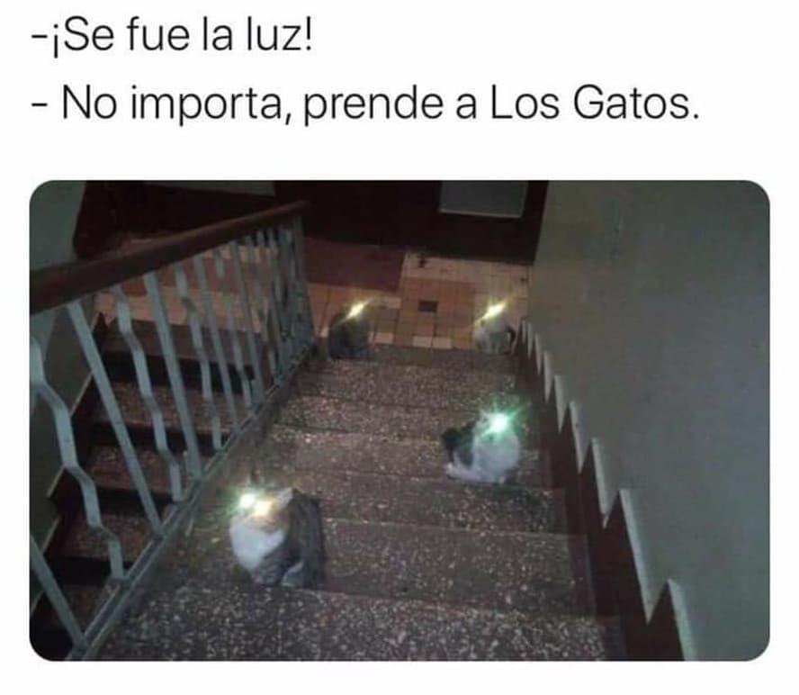 ¡Se fue la luz!  No importa, prende a los gatos.