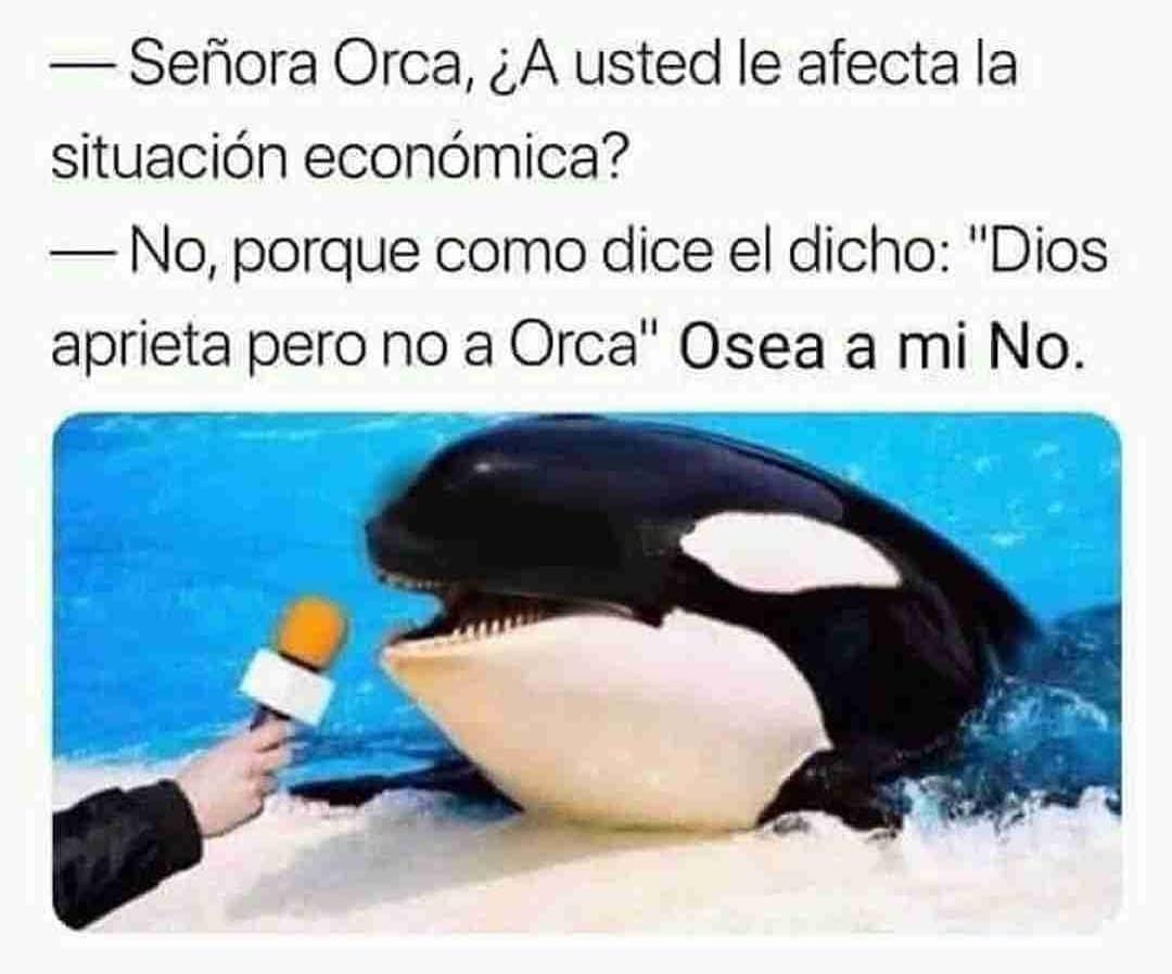 """Señora Orca, ¿A usted le afecta la situación económica?  No, porque como dice el dicho: """"Dios aprieta pero no a Orca"""". O sea a mí no."""