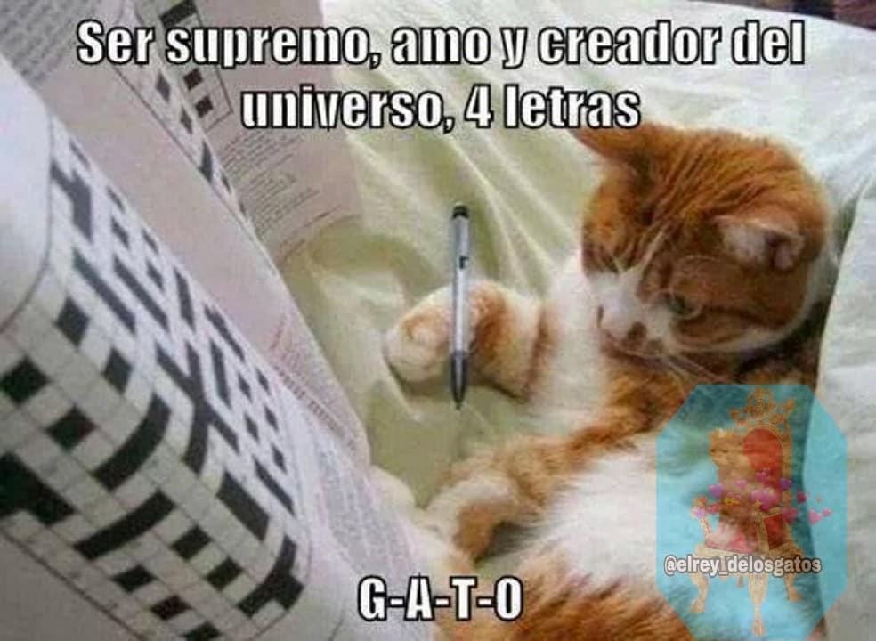 Ser supremo, amo y creador del universo, 5 letras. G-A-T-O.