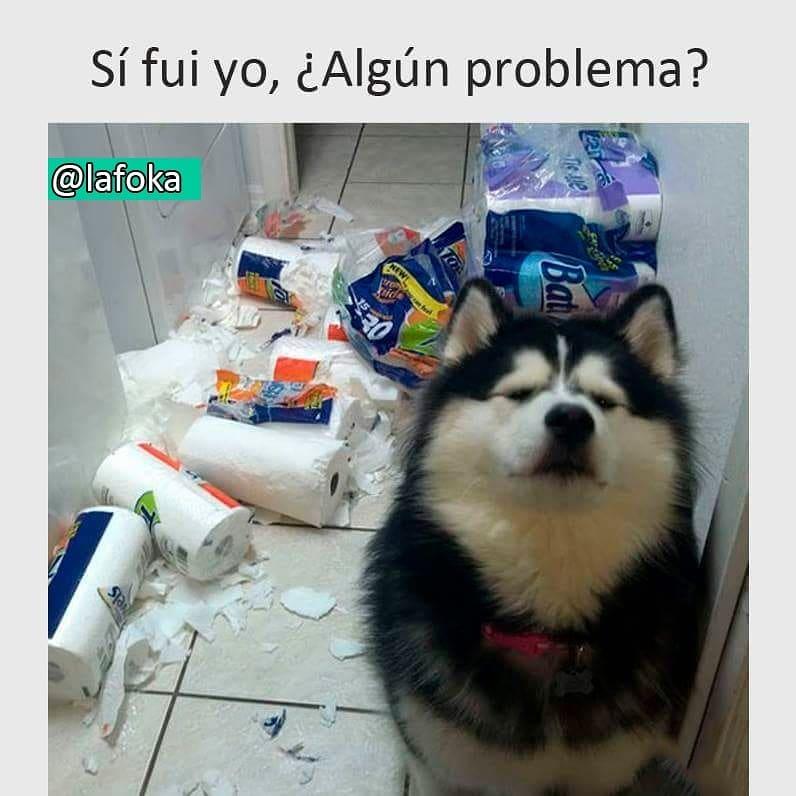 Sí fui yo, ¿algún problema?