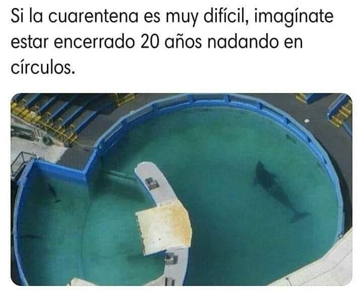 Si la cuarentena es muy difícil, imagínate estar encerrado 20 años nadando en círculos.