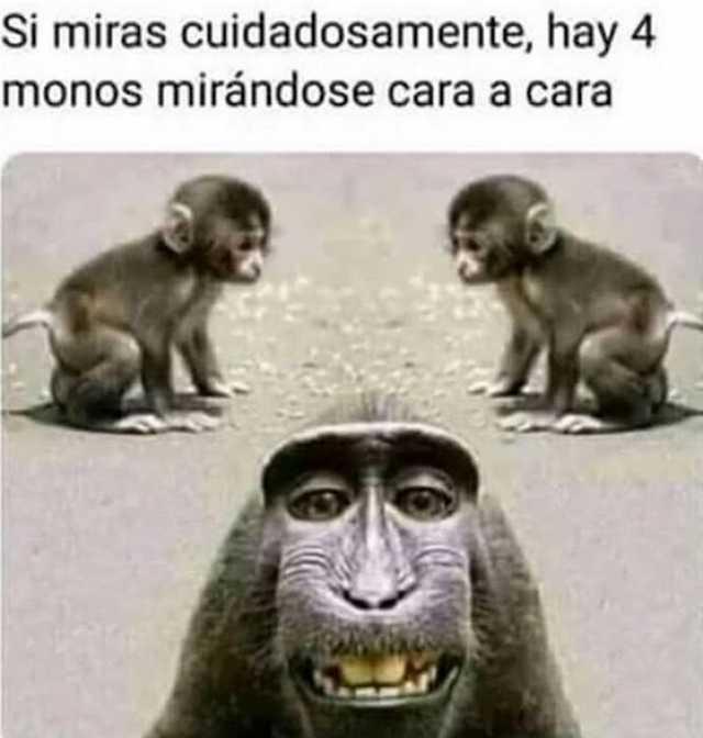 Si miras cuidadosamente, hay 4 monos mirándose cara a cara.
