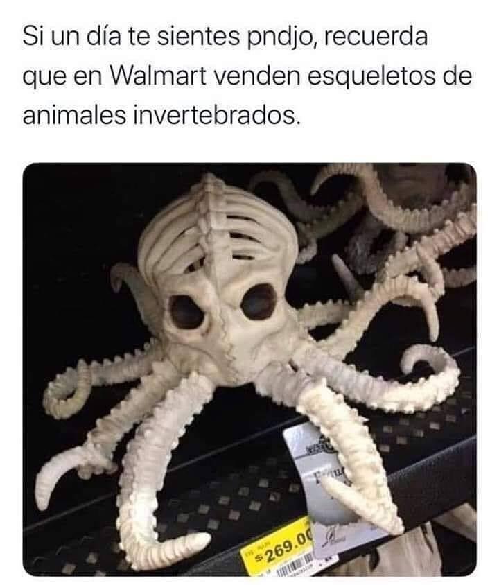 Si un día te sientes pndjo, recuerda que en Walmart venden esqueletos de animales invertebrados.